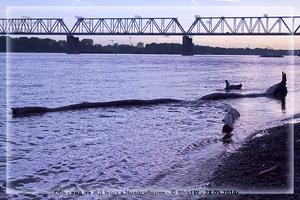 Обь - вид на ЖД мост в Новосибирке (© NickFW - 28.05.2014)