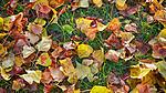 Осенняя листва (© NickFW 03.10.2015)