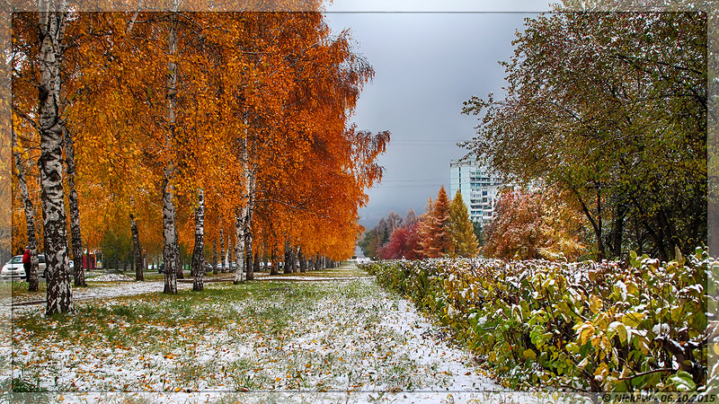 Берёзовая аллея на Волгоградской (© NickFW - 06.10.2015)