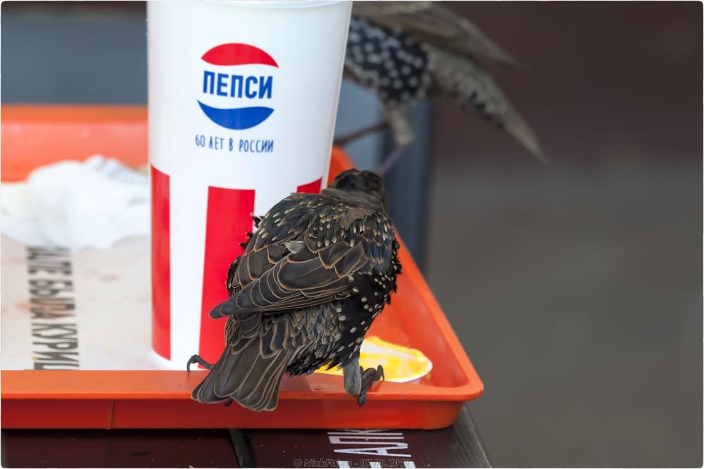 2. Скворцовый ужин в KFC - © NickFW.ru - 07.09.2019г.