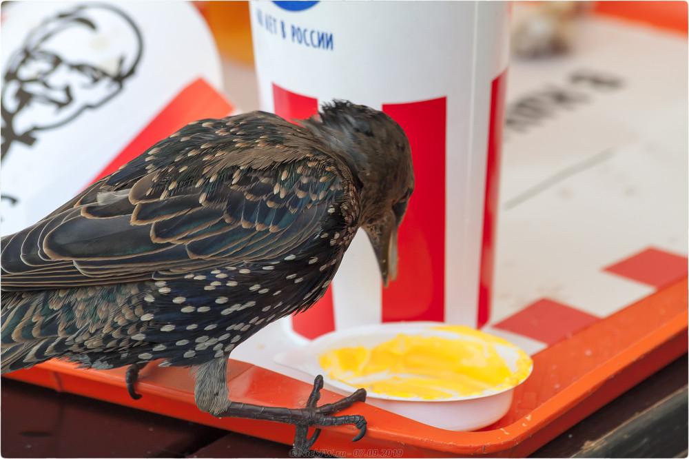 3. Скворцовый ужин в KFC - © NickFW.ru - 07.09.2019г.