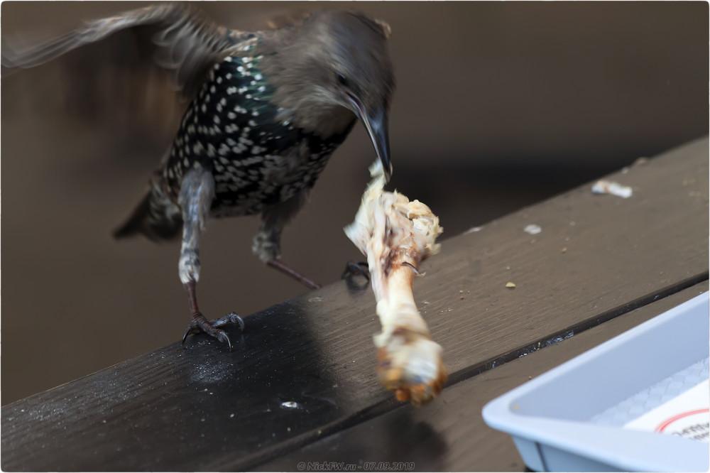 5. Скворцовый ужин в KFC - © NickFW.ru - 07.09.2019г.