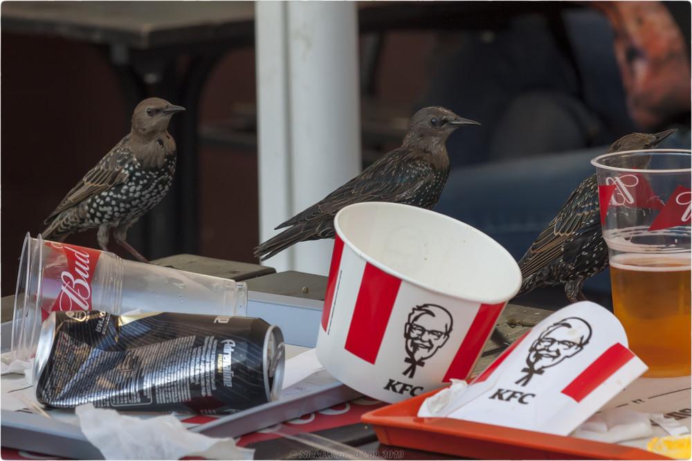 7. Скворцовый ужин в KFC - © NickFW.ru - 07.09.2019г.