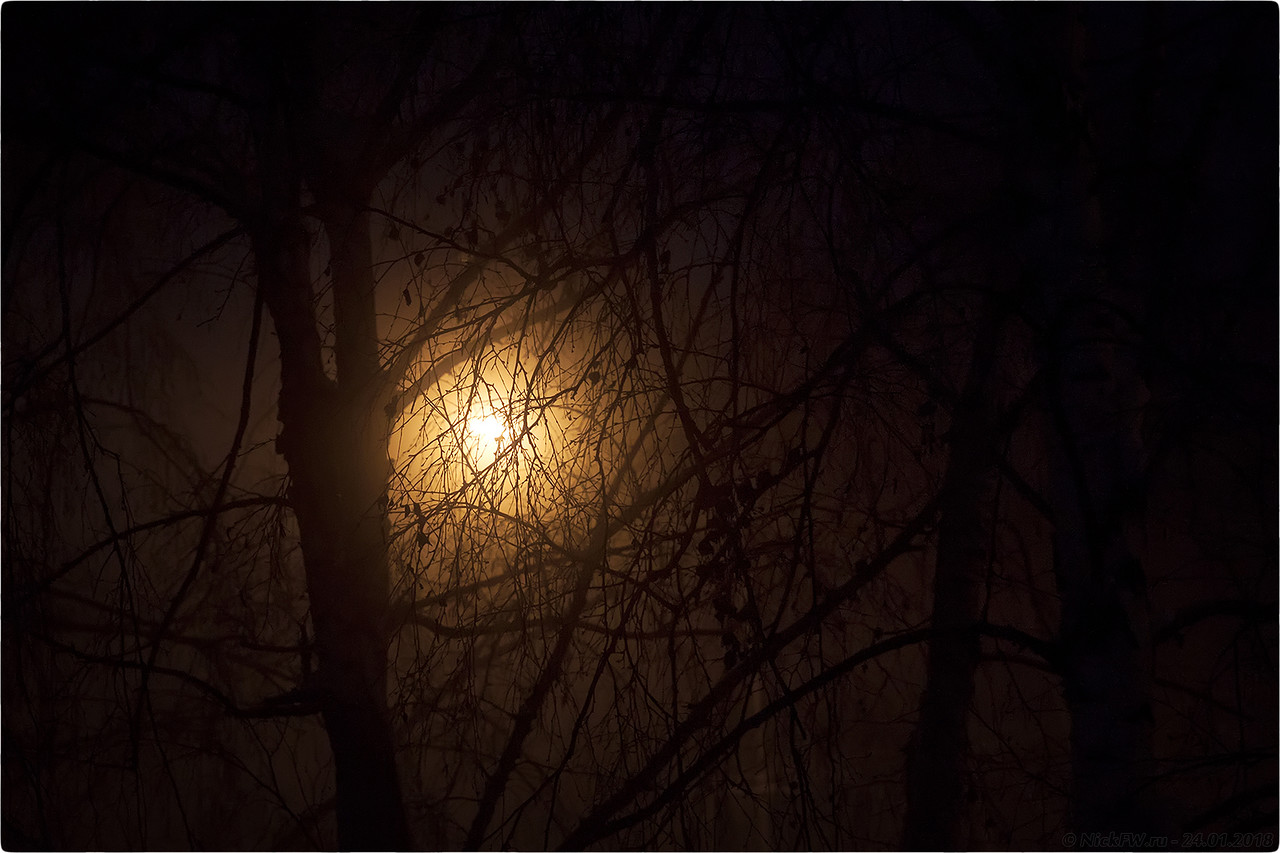 Утро Мороз Фонарь Деревья [© NickFW - 24.01.2018]