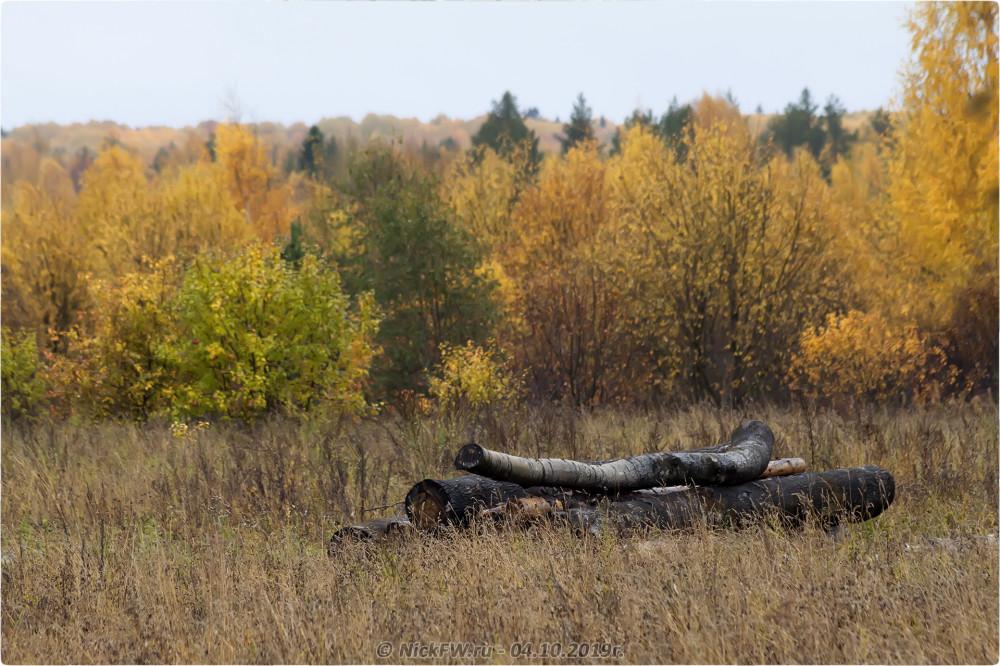 1. Осень - Брёвна в Барыгино © NickFW.ru - 04.10.2019г.