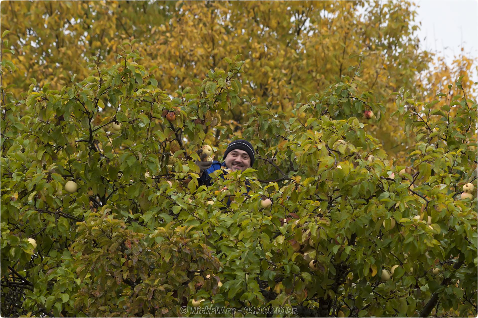 сбор урожая... © «Фото.дзен - NickFW.ru»
