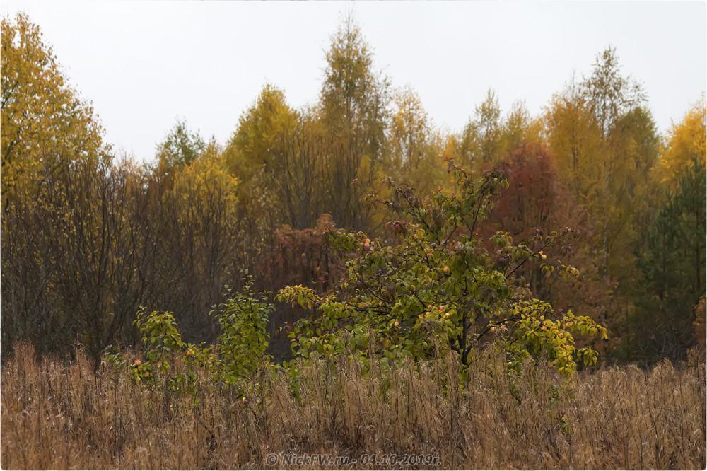 10. Яблоня в Барыгино - © NickFW.ru - 04.10.2019г.
