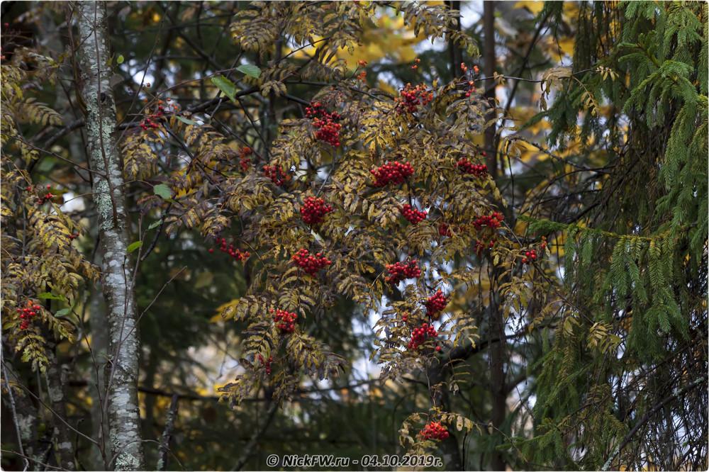 6. Растительность в Барыгино - © NickFW.ru - 04.10.2019г.