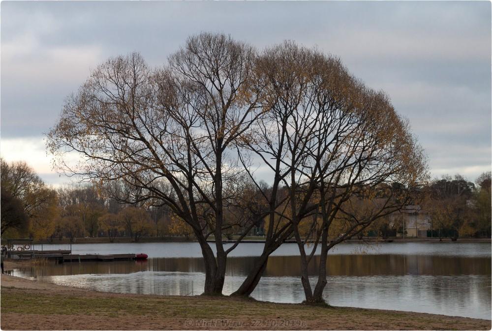 11. Деревья на пляже в Парке «Мещерский» — © NickFW.ru — 22.10.2019г.
