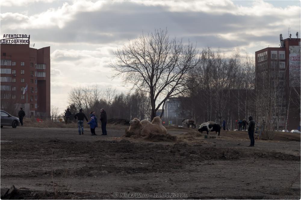 1. Передвижной «Зоопарк» в Кемерово © NickFW.ru — 18.04.2019г.