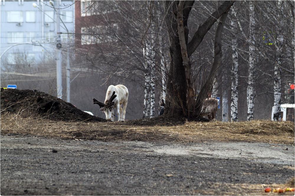 3. Передвижной «Зоопарк» в Кемерово © NickFW.ru — 18.04.2019г.