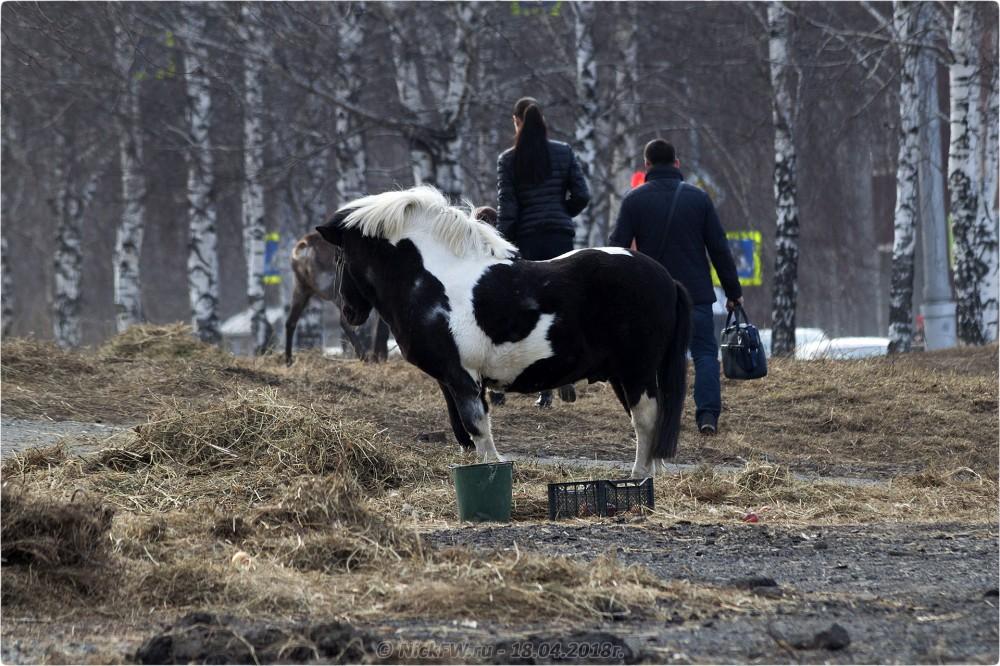 4. Передвижной «Зоопарк» в Кемерово © NickFW.ru — 18.04.2019г.