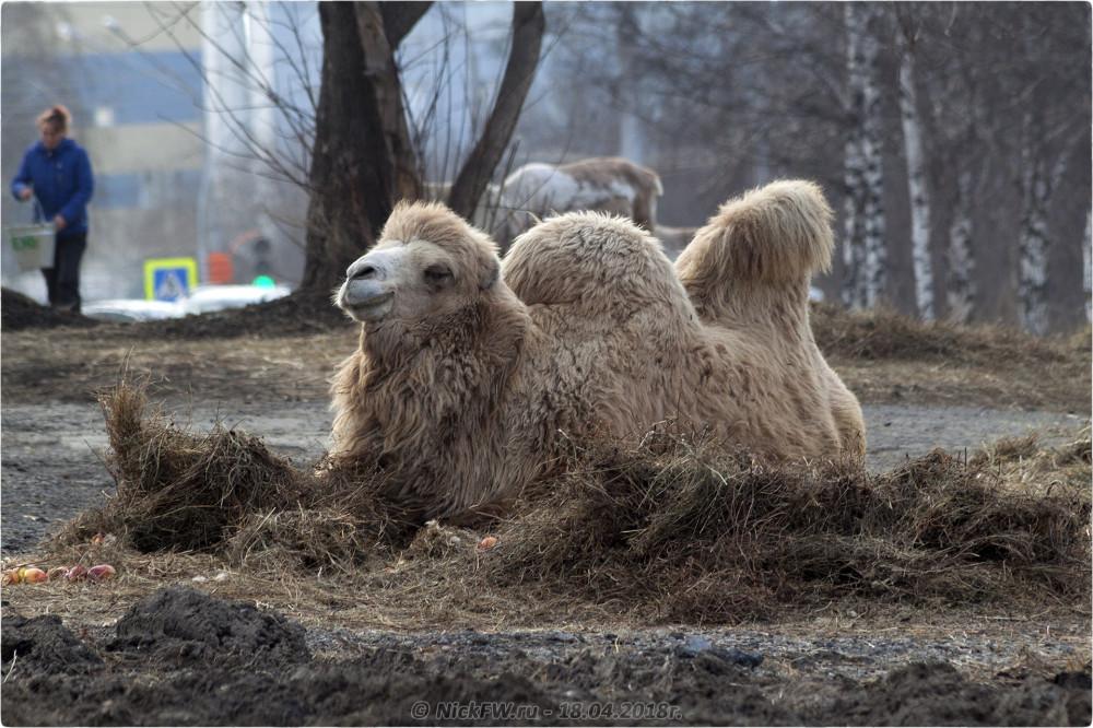 5. Передвижной «Зоопарк» в Кемерово © NickFW.ru — 18.04.2019г.