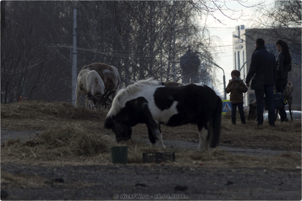 6. Передвижной «Зоопарк» в Кемерово © NickFW.ru — 18.04.2019г.