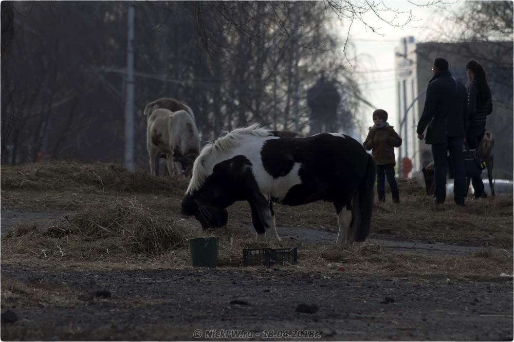7. Передвижной «Зоопарк» в Кемерово © NickFW.ru — 18.04.2019г.