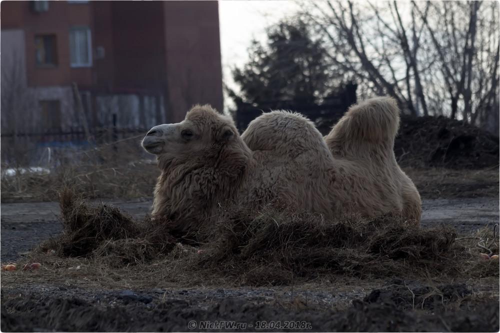 8. Передвижной «Зоопарк» в Кемерово © NickFW.ru — 18.04.2019г.