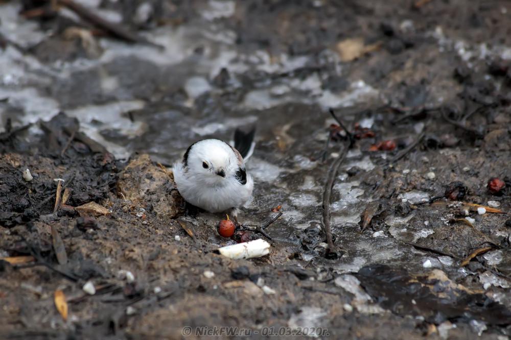 1. Ополовник выискивает ягоды среди бычков и прочего мусора © NickFW.ru - 01.03.2020г.