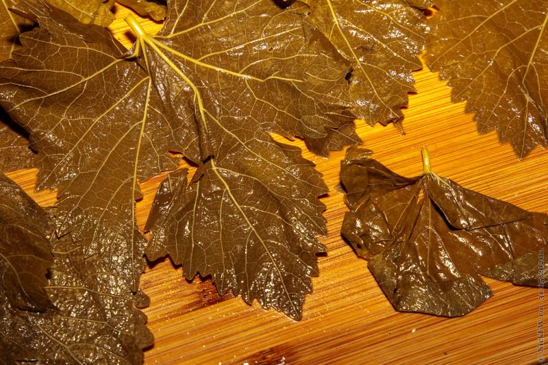 5. Разнокалиберные листья © NickFW.ru - 31.05.2020г.