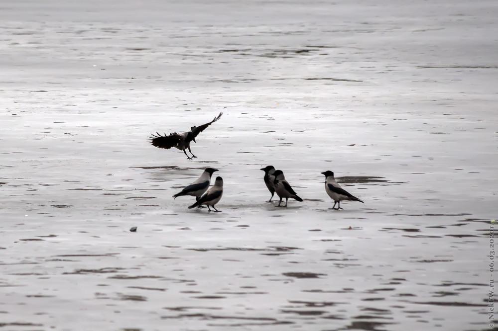 6. Серые вороны © NickFW.ru - 06.03.2020г.