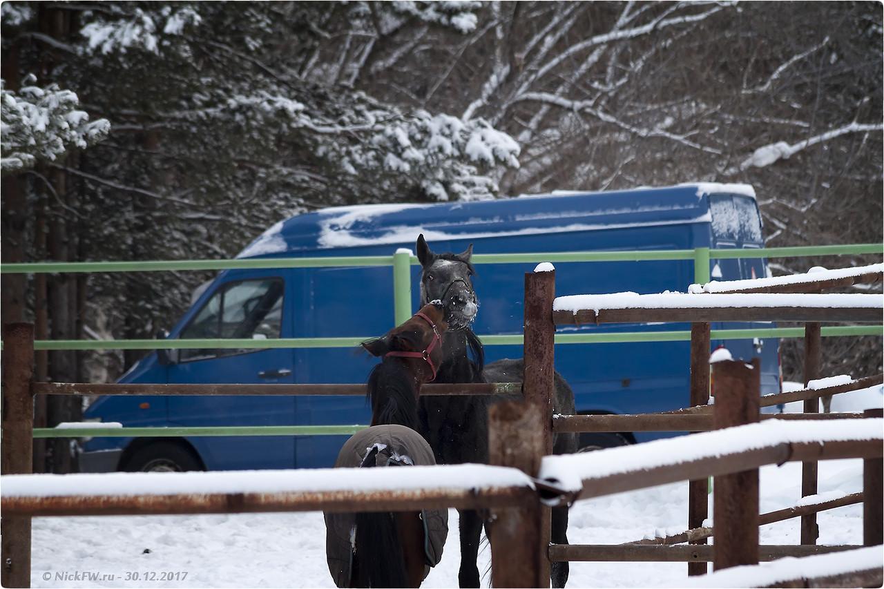 КСК Амазонки - Лошадь с жеребёнком [© NickFW - 30.12.2017]