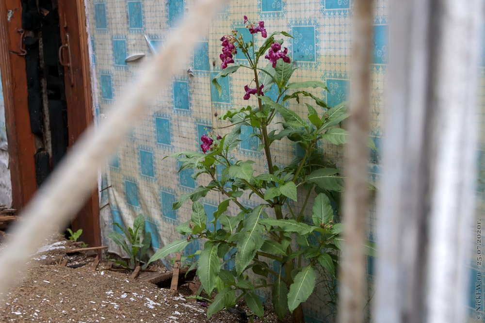 1. Цветок в руинах © NickFW.ru - 25.07.2020г.