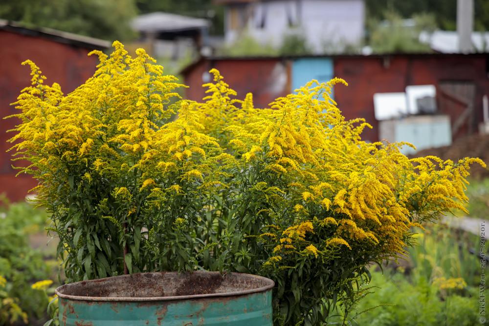 4. Жёлтые © NickFW.ru - 25.07.2020г.