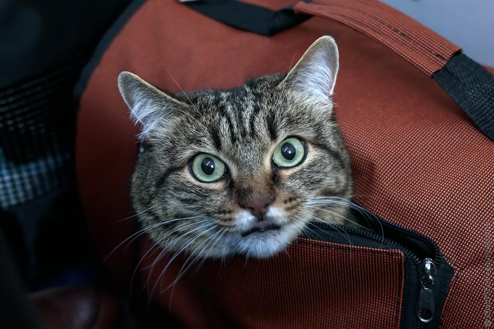 1. Котейка © NickFW.ru - 30.09.2020г.