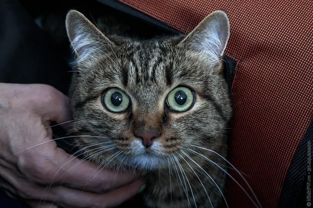 2. Котейка © NickFW.ru - 30.09.2020г.