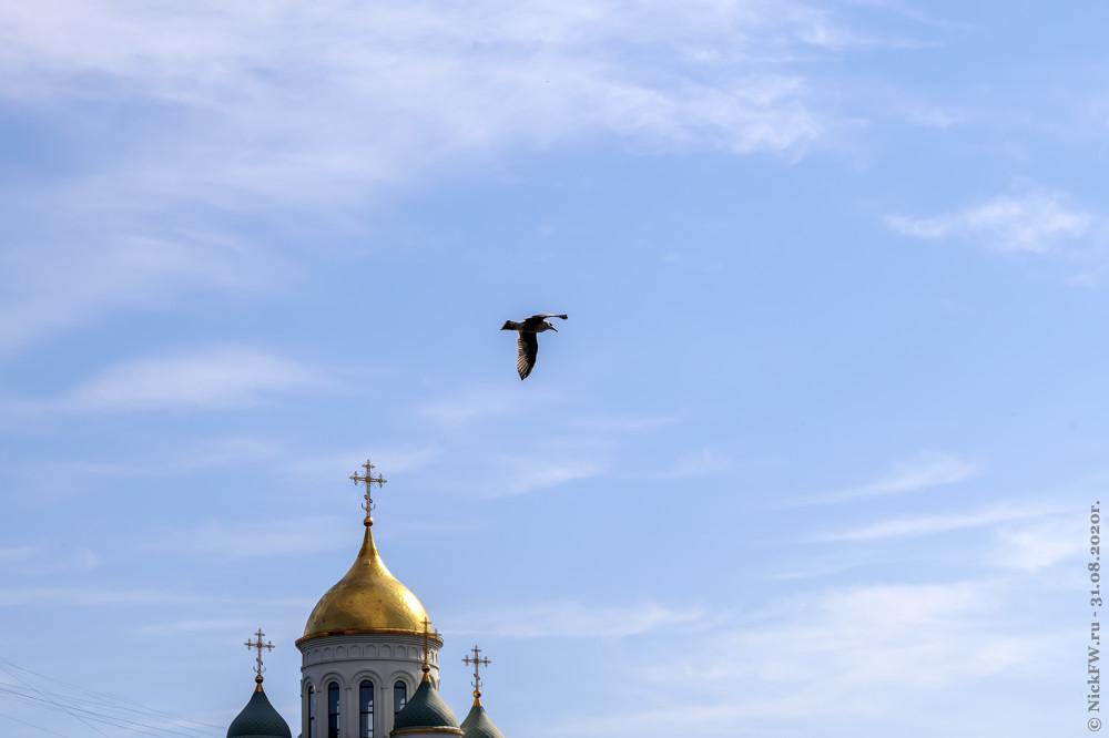 3. Чайки в Солнцево © NickFW.ru - 31.08.2020г.