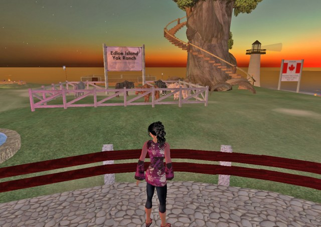 Yak Ranch on Edloe, Island