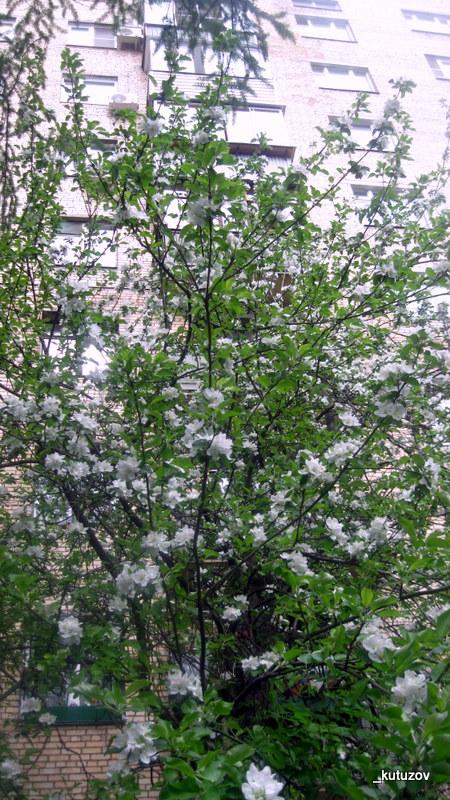 Цветочечек