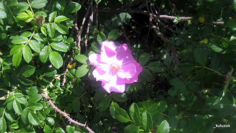 Цветокуст