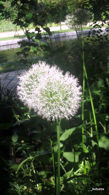 Огород-цветошар
