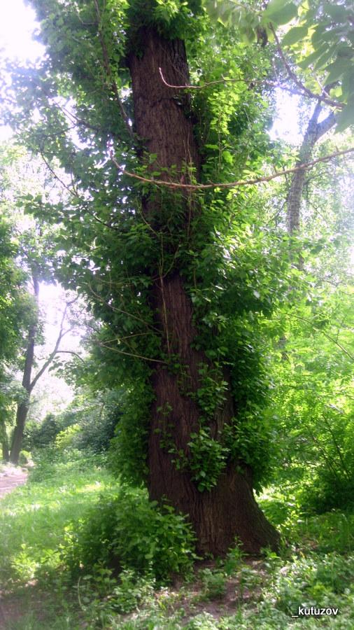 Огород-дерево