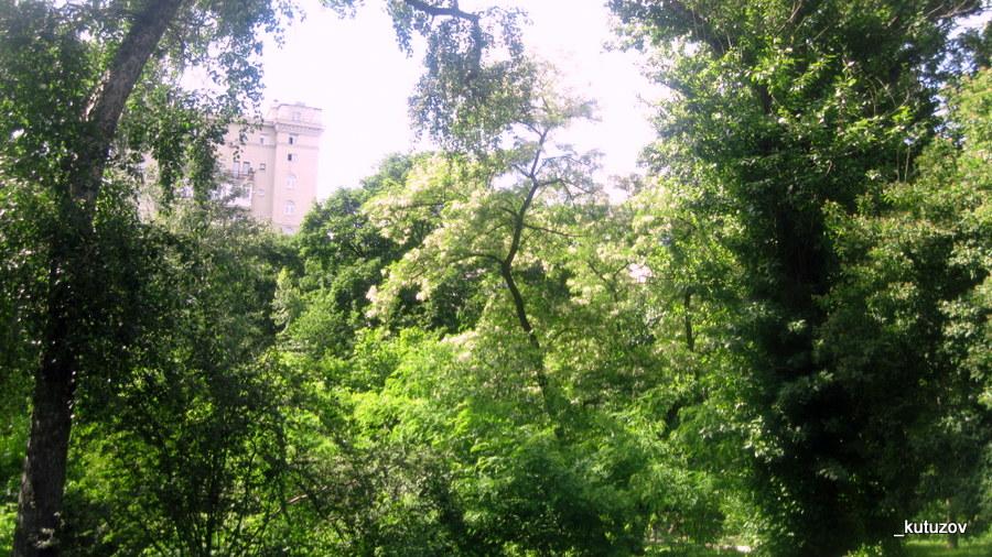 Огород-зелень
