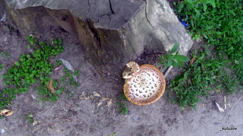 Парк-грибы