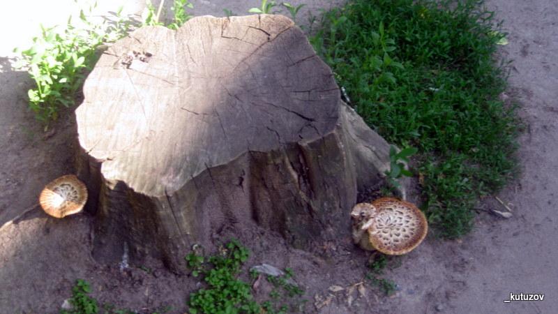 Парк-грибы-1
