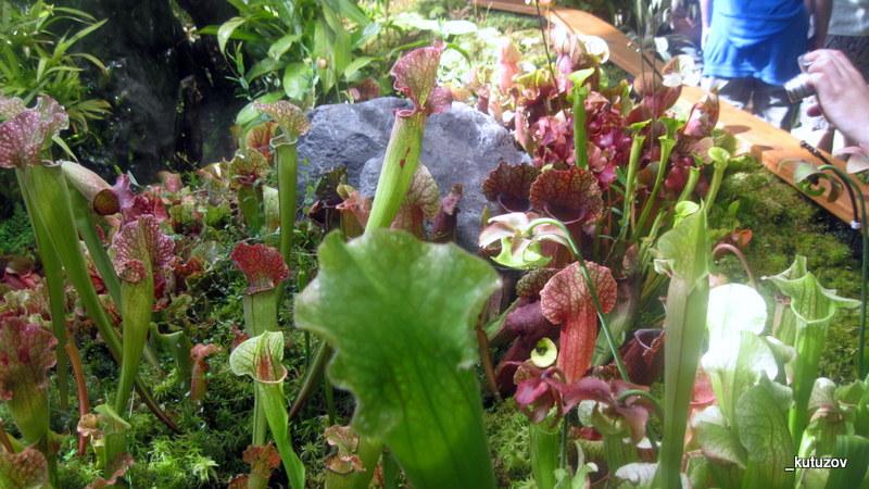 Огород-хищники-1