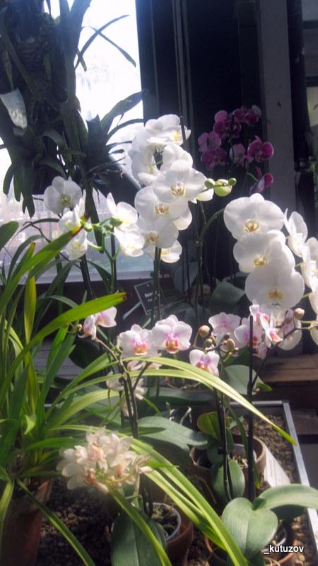 Огород-цветет