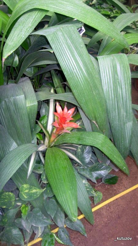 Огород-цветет-1