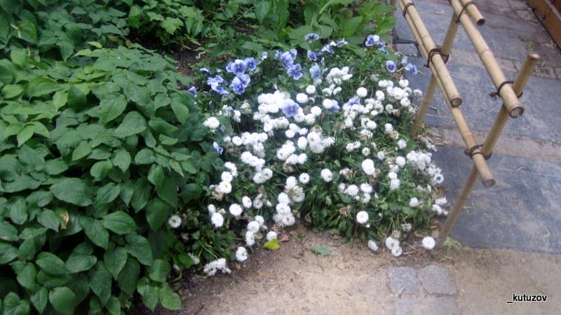 Огород-цветки