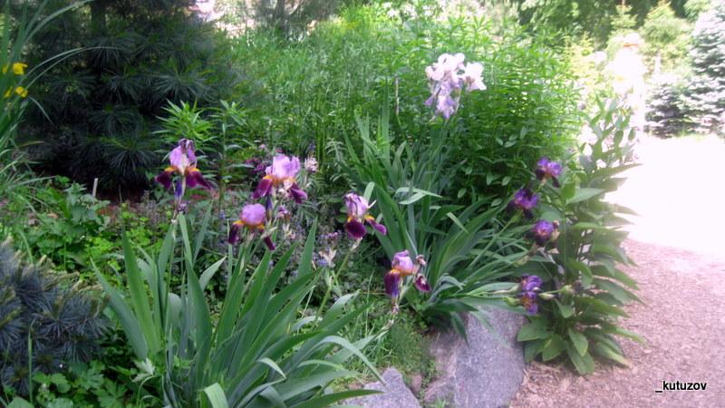 Огород-цветко