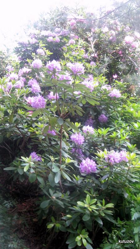 Огород-цветы