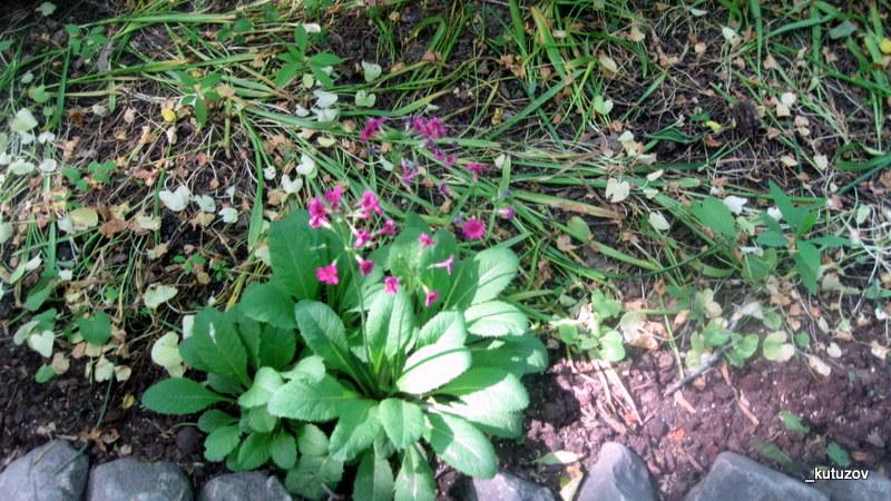 Огород-цветочки