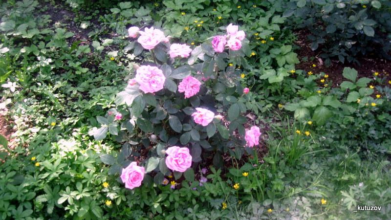 Огород-цветуи