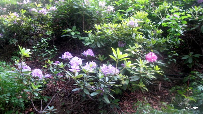 Огород-цветы-1