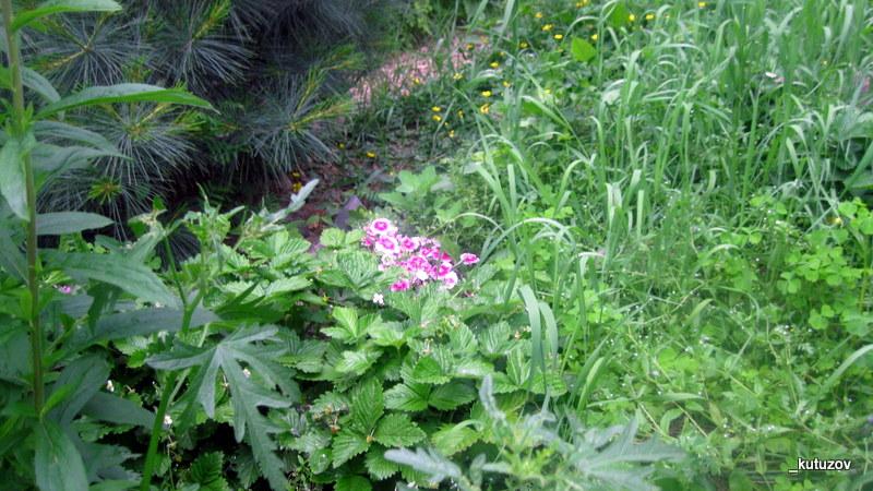 Огород-цветы-3