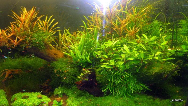 Огород-аквариум