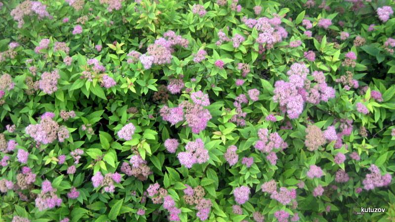 Цветы непонятные-2