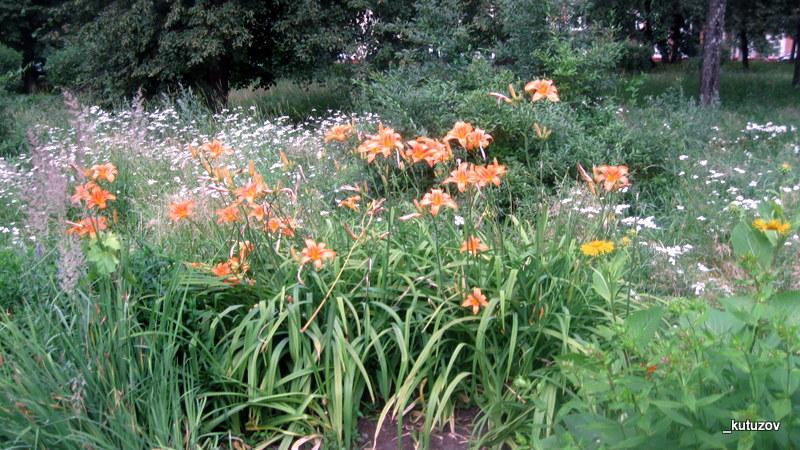 Парк-цветы-оранж